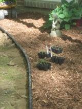 Gathering plants