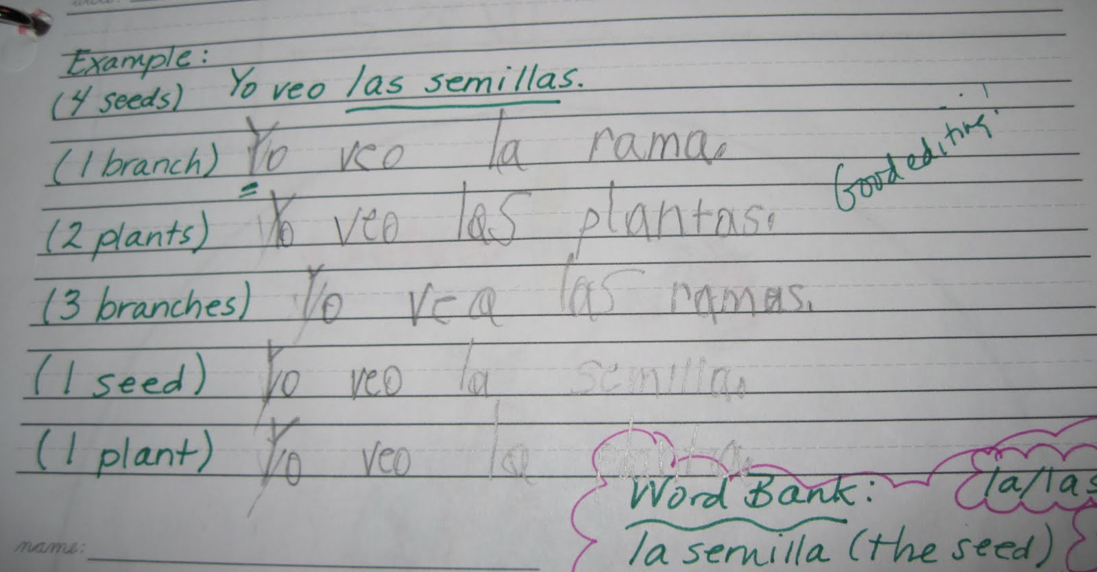 Step 4: We wrote simple sentences about plants using high-frequency  sentences starters (Yo veo [I see], Que ves [What do you see?