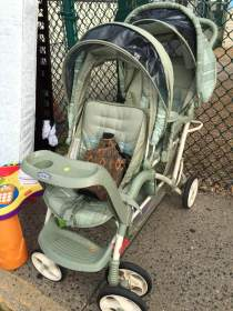 This two-seater stroller... for $20! {Photo credit (c) Kim M. Bennett, 2016}